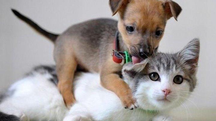 Кошка не смогла пройти мимо и помогла щенку.