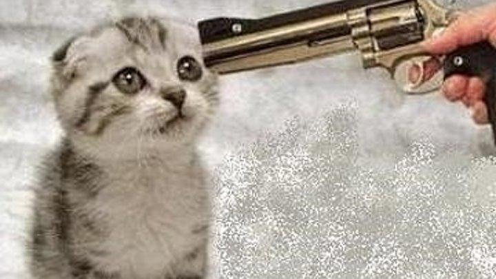 Убийство кота / Murder of a Cat (США 2014 HD) 16 + Комедия, Триллер