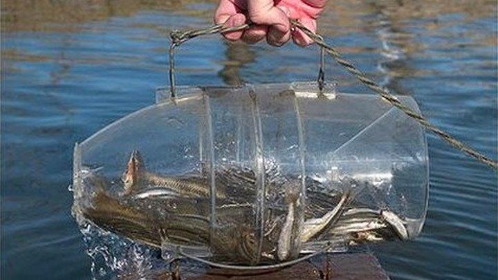 Как за 30 сек сделать ловушку для рыбы своими руками _ How to make a fish trap in 30 seconds