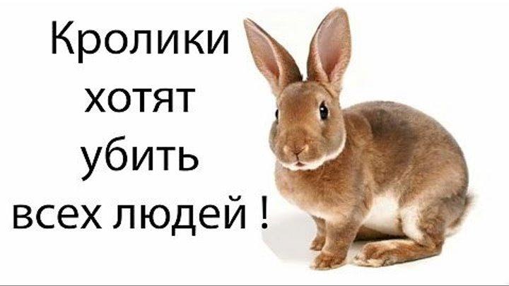 Кролик-убийца / Кролик, убивающий членом (Финляндия 2011 HD) 18+ Ужасы, Фантастика, Комедия ツ