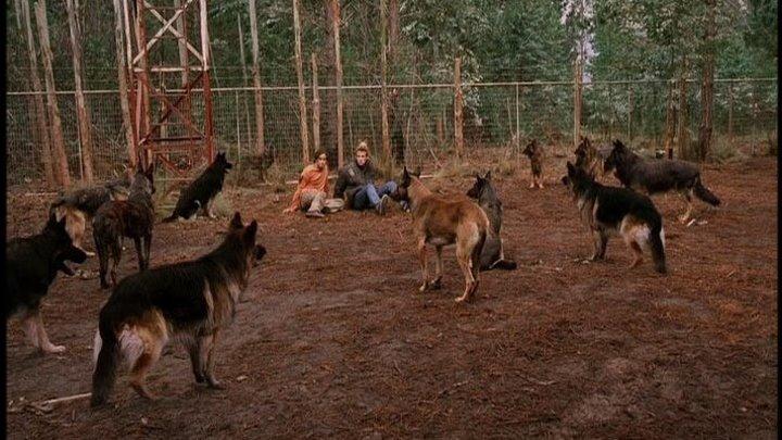 кино. Свора ( собаки 2006)