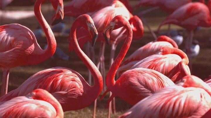 Озеро Накуру в кении - дом миллионов фламинго! Lake Nakuru