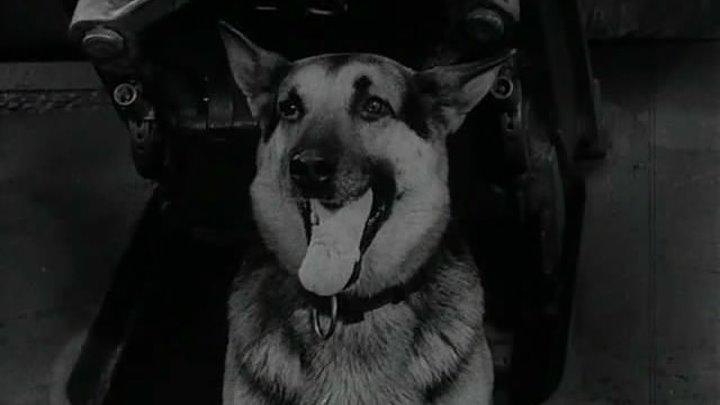 Четыре танкиста и собака (1966) 17 серия