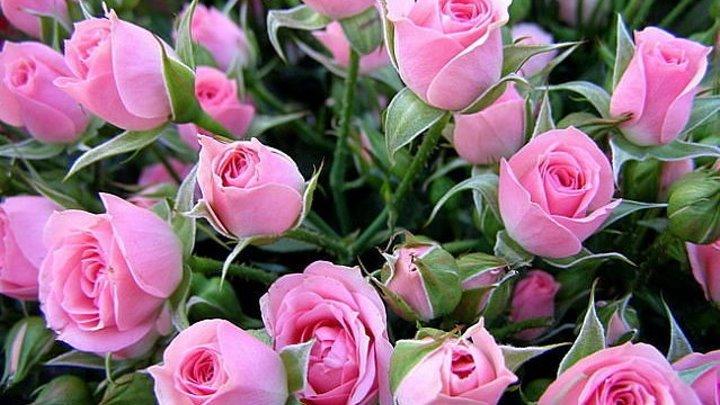 Я дарю Вам розовое настроение!