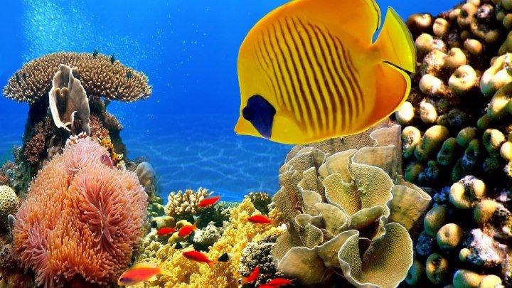 Коралловый риф 3D_ Подводный мир Египта. Удивительный фильм