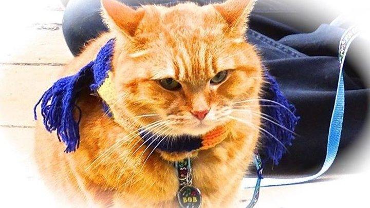 Уличный кот по кличке Боб (2016) драма комедия семейный