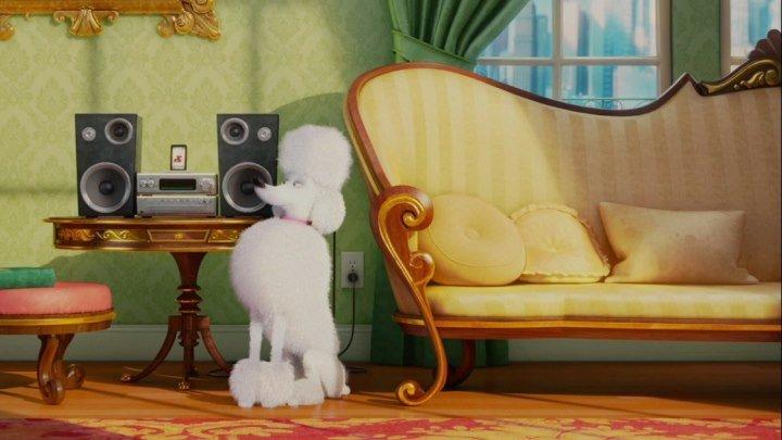"""Быть паинькой?! Не тут то было!!!! (сцена из мультика """"Тайная жизнь домашних животных"""" HD1О8Ор)"""