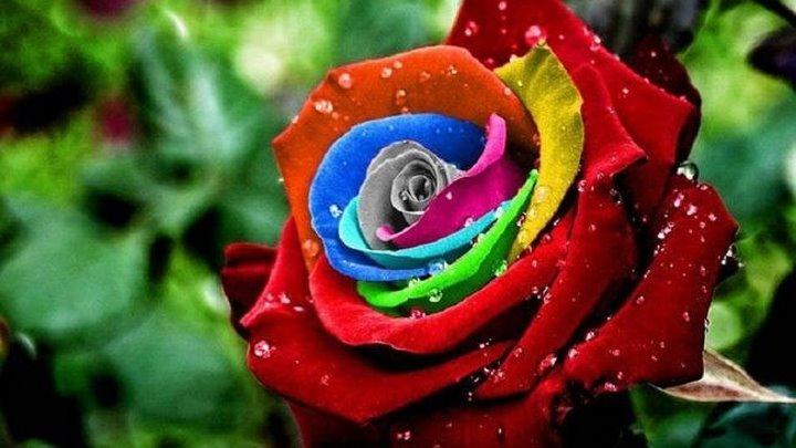 Самые красивые цветы со всего мира!........