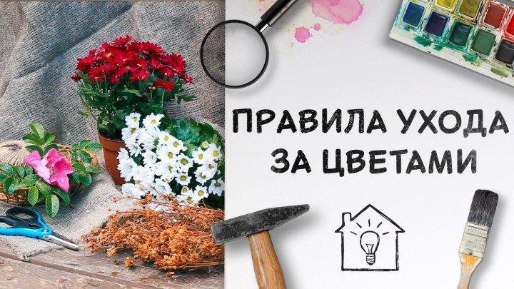 Правила ухода за цветами [Идеи для жизни]