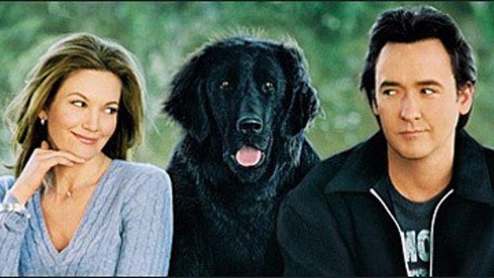 любовь к собакам обязательна(суб)