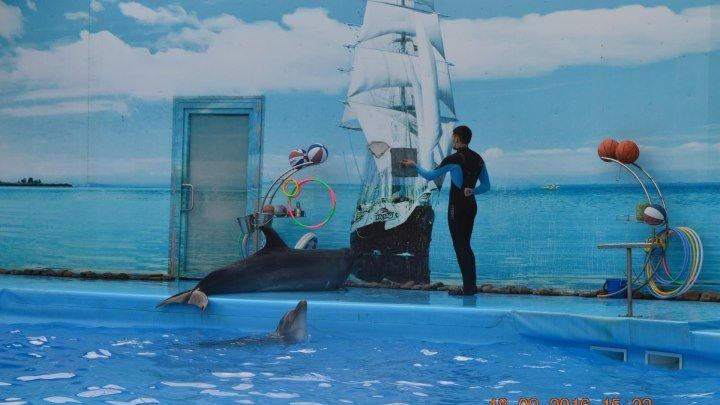 До свидания дельфины Бердянск ))) 18 сентября 2016