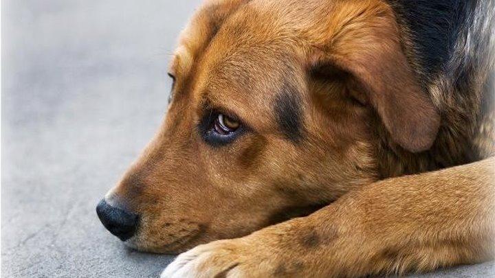 Парень спас истощённого пса. ДОБРОТА спасёт мир!!!