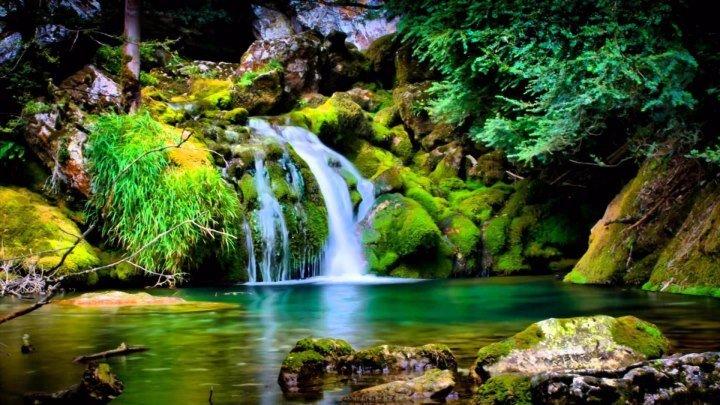 Коста-Рика – Восхитительная флора и фауна!