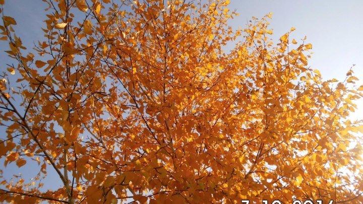 Это Осень ! Акмолинская область.