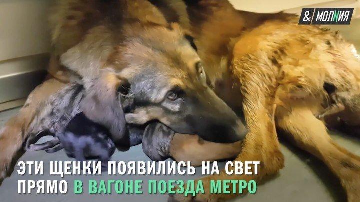 Девять щенят московского метро