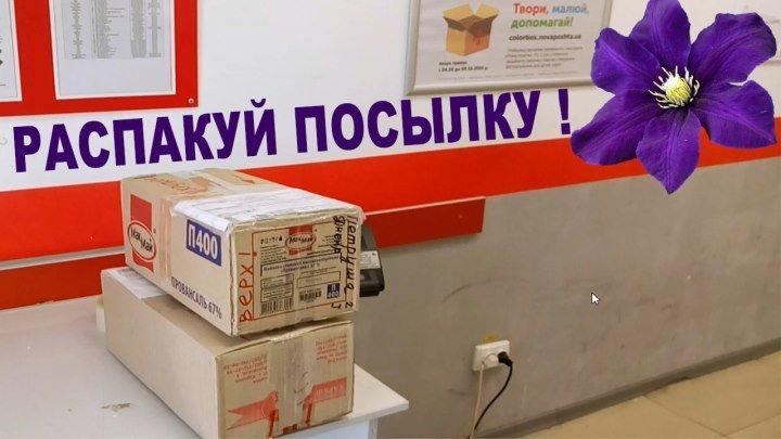 КЛЕМАТИС КУПИТЬ - САЖЕНЦЫ КЛЕМАТИСОВ распаковка посылки Nina Petrusha channel Clematis TV
