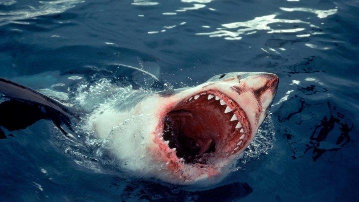 BBC: 10 самых опасных акул 2001 2 серия документальный фильм