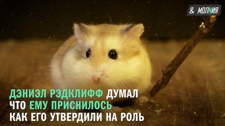 Факты о фильме Гарри Поттер и философский камень