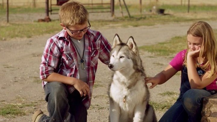 Тимбер – говорящая собака (2016 HD 1080p) Семейный