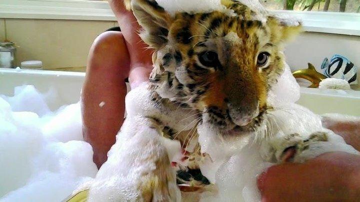 Тигриный хвост HD(Комедия, Семейный)2014