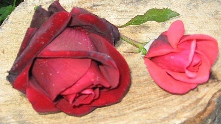 Band Odessa - Сорвали розу!