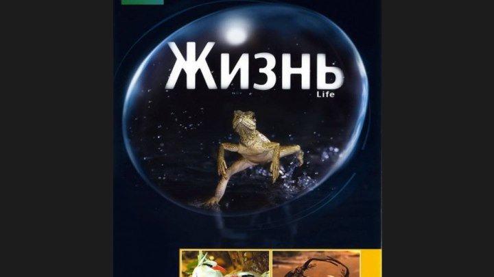 """""""BBC: Жизнь"""" _ (2009) Документальный. Серии 1-2. (HD 720p.)"""
