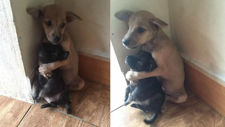 Тронуло до слёз. Брошенной собаке возвращают её малышей