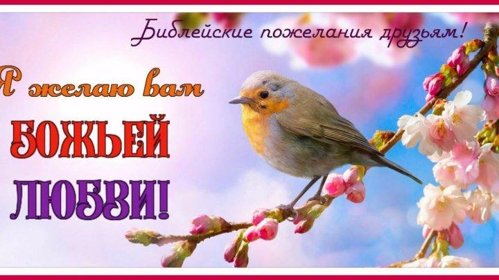Я желаю вам Божьей любви!