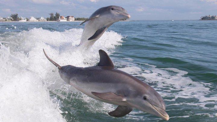 DJ Slon & Ангел- А - А дельфины в ураган, уплывают в океан...