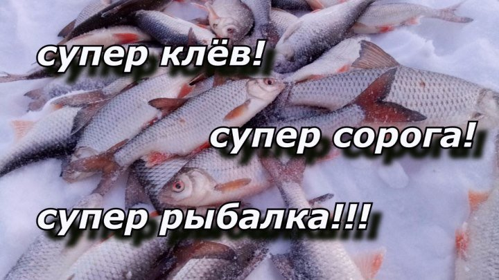 СУПЕР КЛЁВ! СУПЕР СОРОГА! СУПЕР РЫБАЛКА!!!