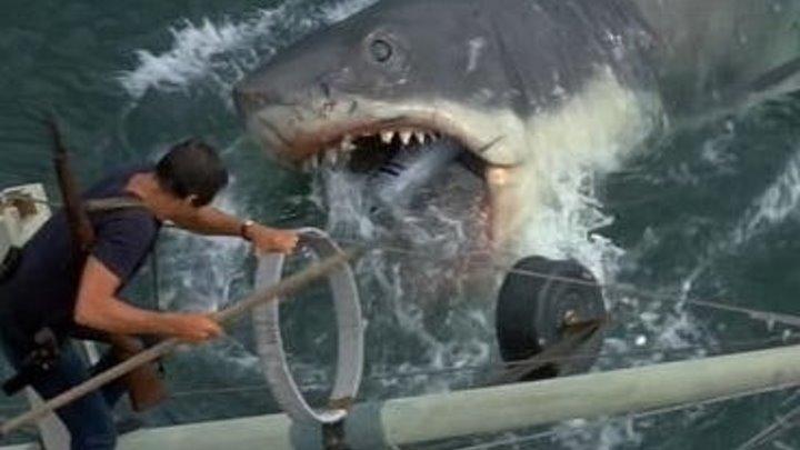 Акулы на свободе. ужасы, фантастика, боевик
