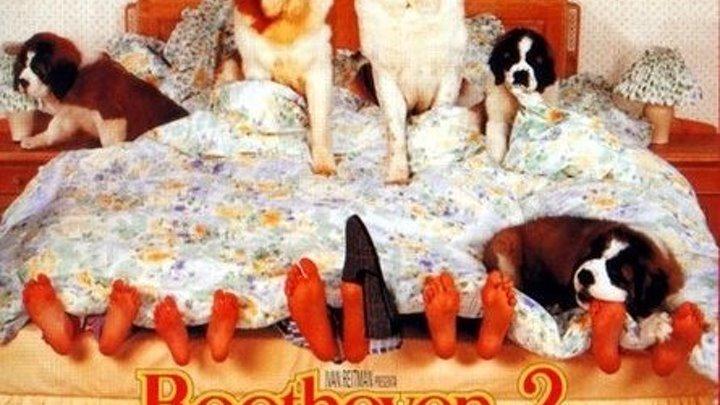 """супер семейная комедия _ Бетховен 2 (1993)Жанр: Мелодрама, Комедия, Семейный. Слоган: """"И вновь семья Ньютонов испытывает все «радости» собачьей жизни.""""."""