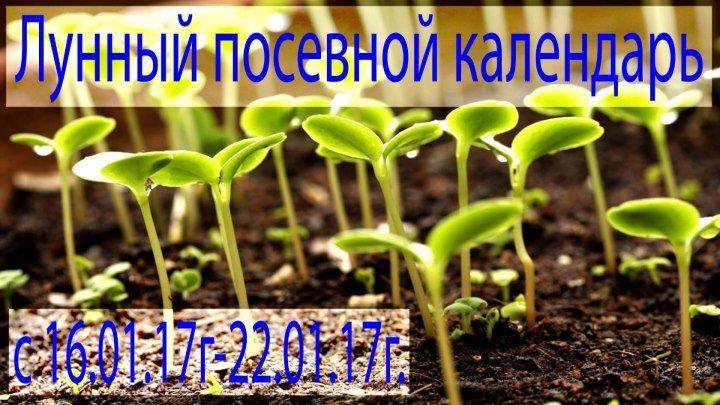 Лунный посевной календарь 16.01.2017 год -22.01.2017 год.