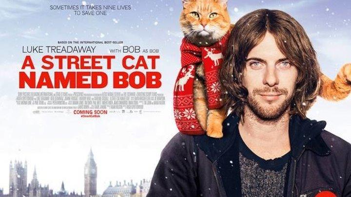 Уличный кот по кличке Боб HD(драма, комедия, семейный, биография)2016