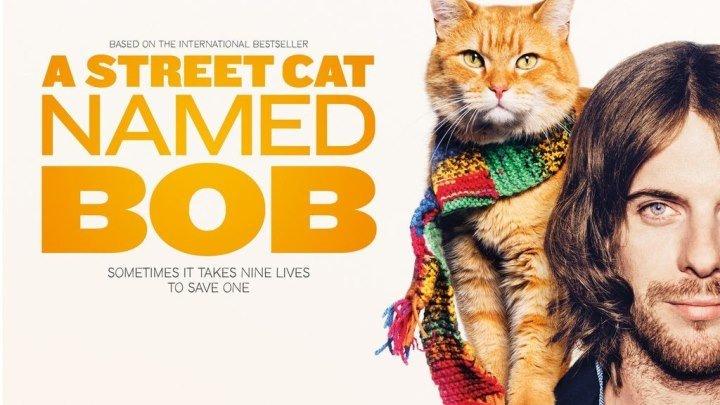 Уличный кот по кличке Боб 2016
