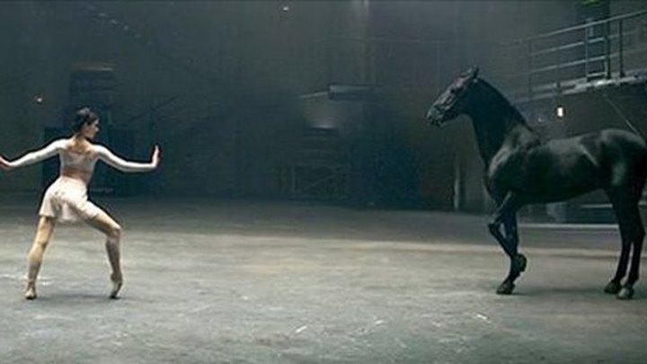 Красота и грация: балерины и лошадь.