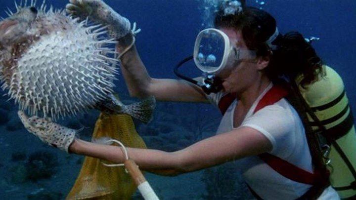 Бездна (приключенческий триллер с Робертом Шоу, Жаклин Биссет и Ником Нолти) | США, 1977