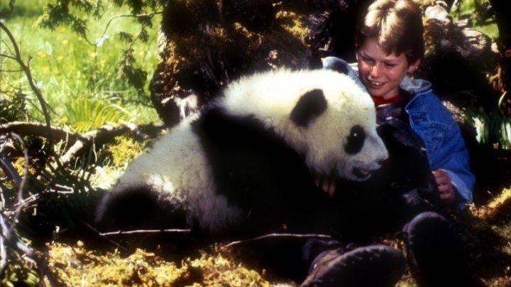 Удивительное приключение панды (1995 HD) Драма, Приключения, Семейный