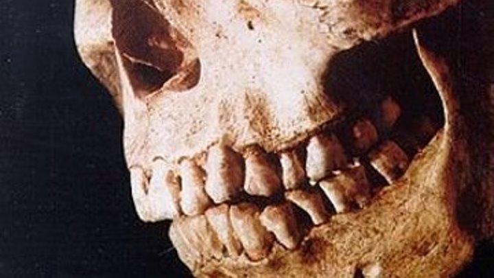 Зловещие мертвецы 2 (1987)Жанр: Ужасы, Триллер, Фэнтези, Комедия.