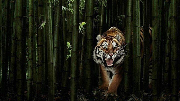 Джунгли_ Мир Животных и Дикой природы