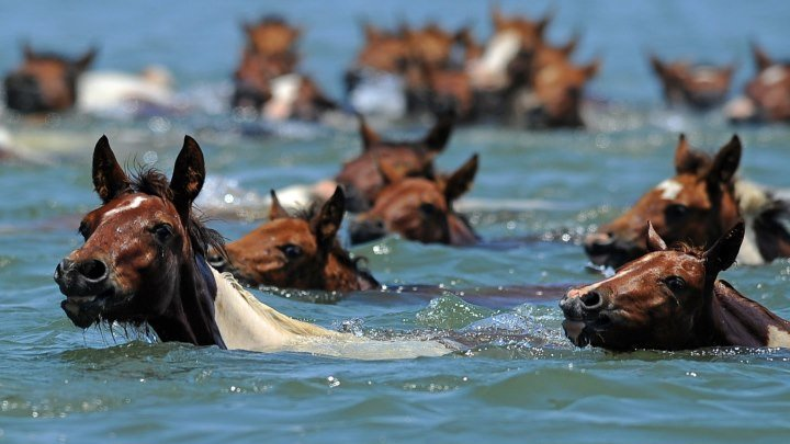 "Лошади в океане. Владимир Захаров и группа ""Рок-острова"""