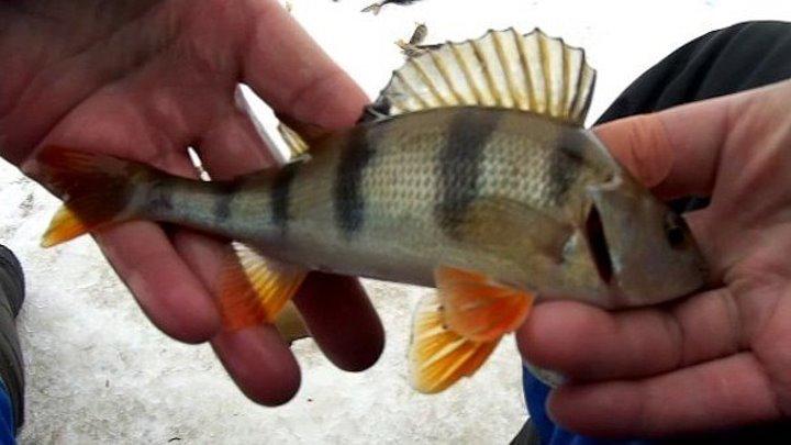 Зимняя рыбалка на мормышку в глухозимье, на малой речке Подмосковья.