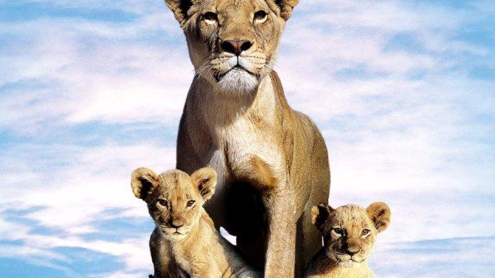 Львиная семейка (2004)