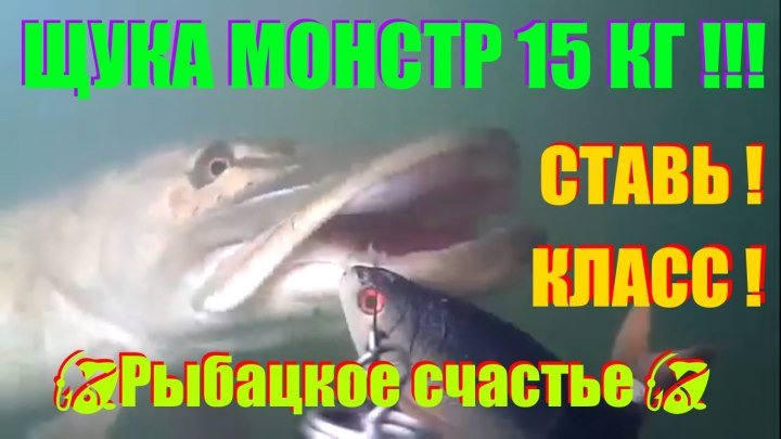 """АТАКА ЩУКИ !!! НА ПРИМАНКУ """" ПЛОТВА """" МОНСТР 15 КГ !!!"""