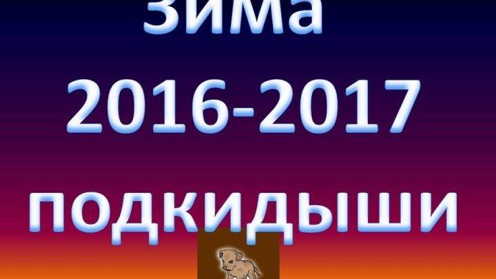 Зима 2016-2017 подкидыши