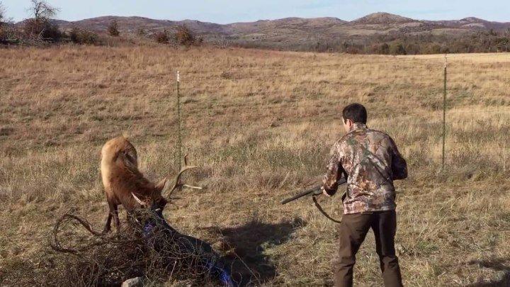 Отстрелил рог что-бы спасти жизнь