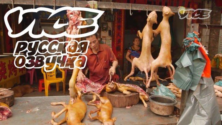 Фестиваль собачьего мяса
