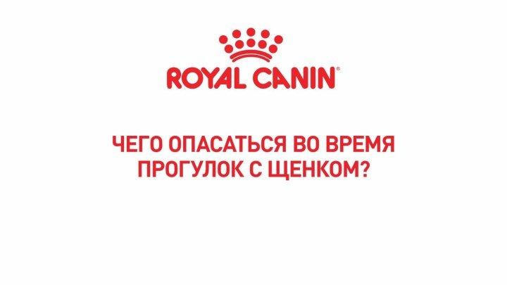 Какие опасности могут подстерегать щенка во время прогулки?