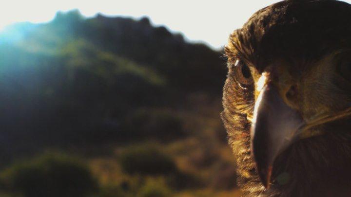 Скорость жизни (1-я серия из 3-х) Хищники юго-запада США (док. фильм)