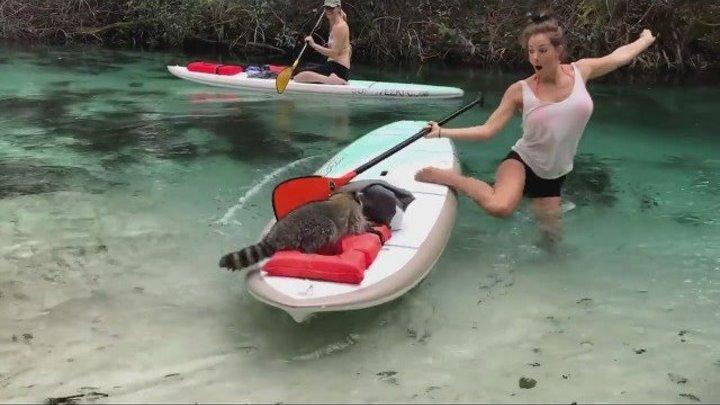 Енот попытался украсть вещи у проплывающей туристки
